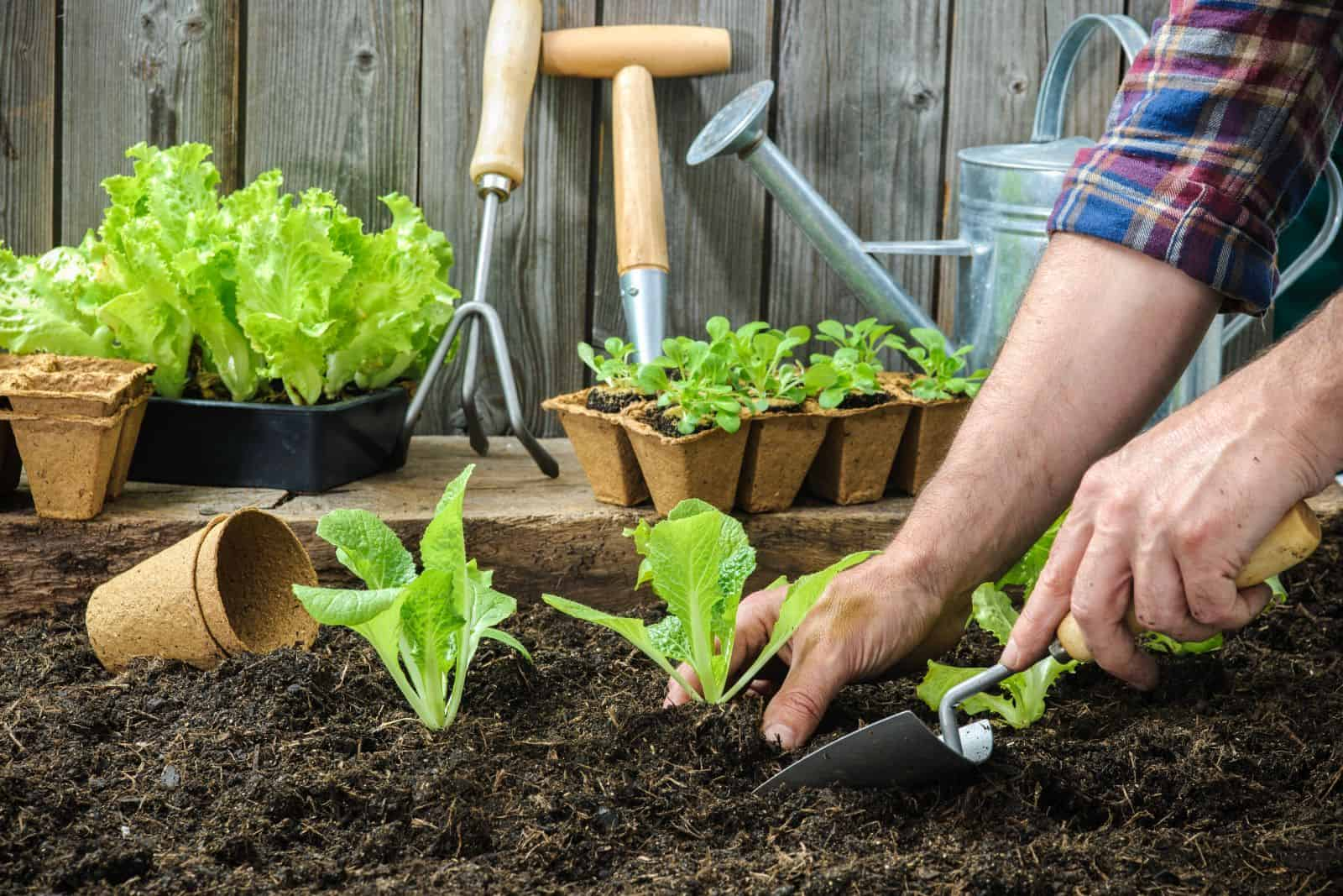 Should You Wet Soil Before Planting Farm And Garden Diy